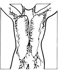 lymph_nodes_illustration